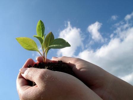 Membangun Budaya Belajar dalam Organisasi …